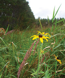 yellow-flower-in-field