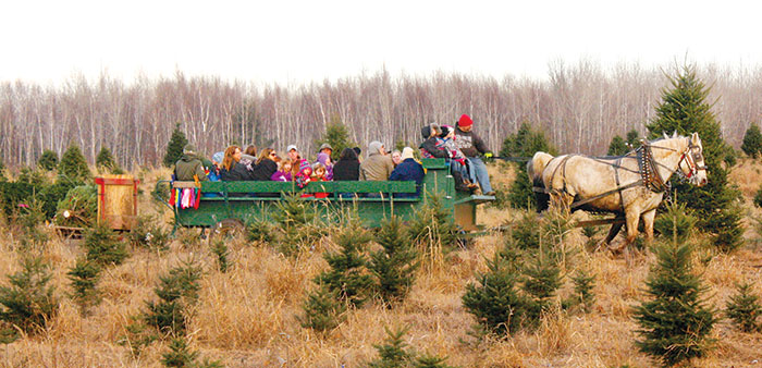 Make some holiday memories at Whispering Pines Tree Farm