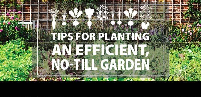 Tips for Planting an Efficient, No-Till Garden