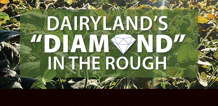 """Dairyland's """"Diamond"""" in the Rough"""