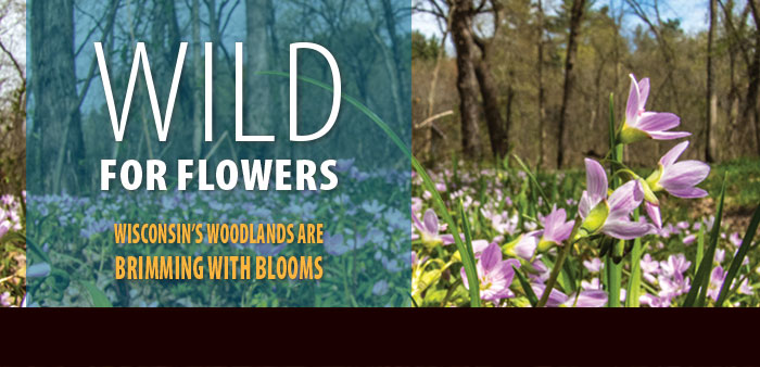 Wild for Flowers