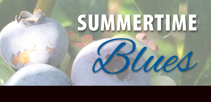 Summertime Blues of the Berry Best Kind